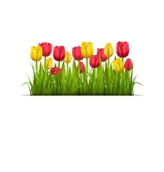 Green grass lawn and tulips isolated on white vector
