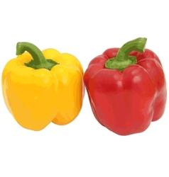 Red and yellow sweet bell pepper isolated on vector image vector image