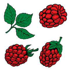 set of hand drawn raspberries isolated on white vector image
