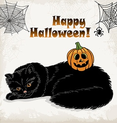 Halloween card template with a cat pumpkin spider vector