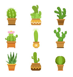Decorative cactus in pots set desert vector