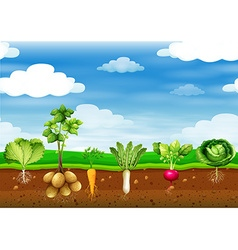 Fresh vegetables in the ground vector