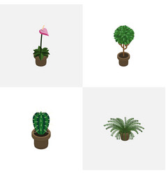 Isometric houseplant set of tree grower peyote vector