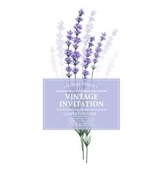 Vintage card with lavender flower vector image