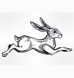 Hare running or jackrabbit jumping vector