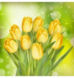Yellow colored tulips eps 10 vector