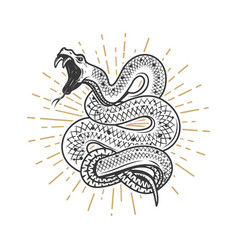 Viper snake on white background design element vector