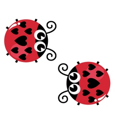 Valentines love lady bugs pair isolated on white vector