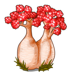 Bottle tree with red flowers and thick stems vector
