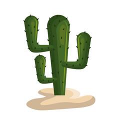 cactus mexican plant icon vector image