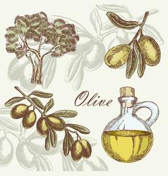 Olive set hand drawn vector