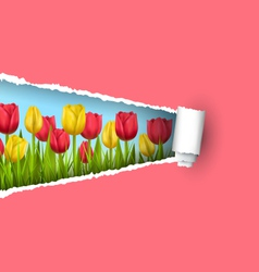 Green grass lawn with tulips and ripped paper vector
