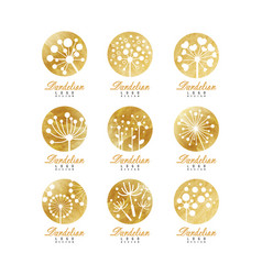 dandelion logo template set beautiful nature vector image