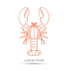 Lobster top view vector