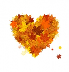 autumn love heart shape leaf vector image vector image