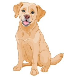 Golden Retriever vector image vector image