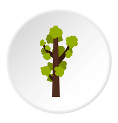 Tall tree icon circle vector