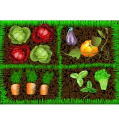 Vegetable garden vector
