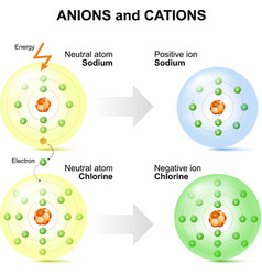Anions and cations vector