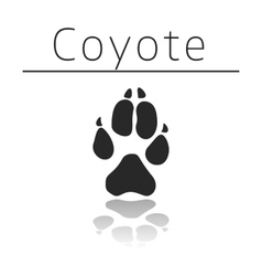 Coyote animal track vector image
