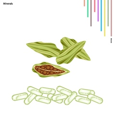 Fresh cardamom bulbs with vitamin and minerals vector