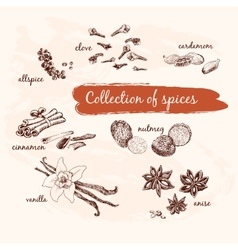 Collection of spices vector image vector image