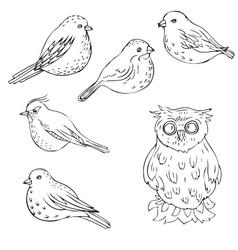 hand drawn birds vector image