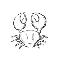 Sketch of big ocean crab vector image