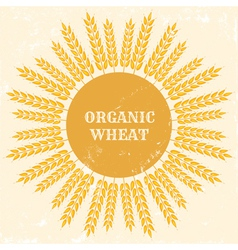 Organic wheat vector