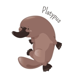 Platypus isolated on white background vector