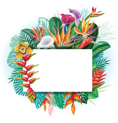 Banner against a background of tropical flowers vector