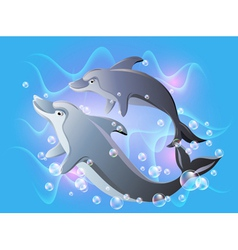 dolphins swims vector image vector image