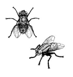 Hand drawn sketch of fly vector