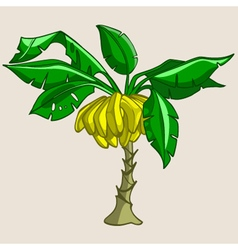 Cartoon banana tree with bananas vector