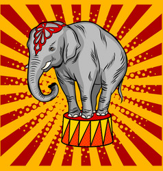 circus elephant on pedestal pop art style vector image