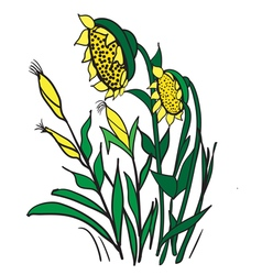 Corn and sunflowers vector