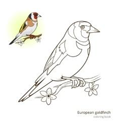 European goldfinch color book vector