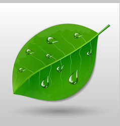 Green leave with water drops vector