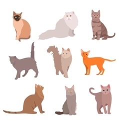 Cat big set beautiful cartoon cats isolated on vector