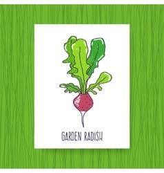 Banner Garden radish vector image vector image
