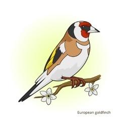 European goldfinch bird educational game vector