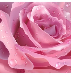 Rose background for your design vector image
