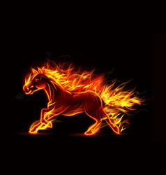 Fire burning horse of running on black background vector image