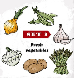 Set 3 Fresh vegetables of onions garlic squash vector image vector image