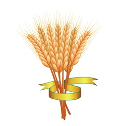 wheat ears and golden ribbon vector image