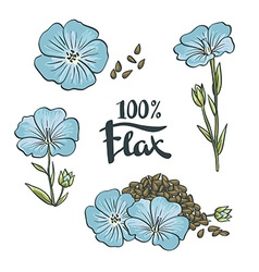 Flax seeds and flowers vector