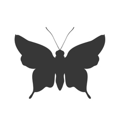 Butterfly silhouette icon insect design vector