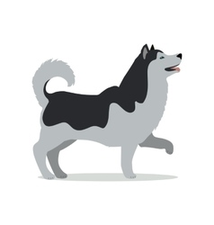 Huskies in stand on white background vector