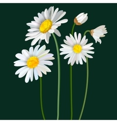 Chamomile flower mint leaves composition isolated vector