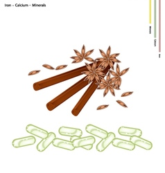 Star anise and cinnamon sticks with minerals vector